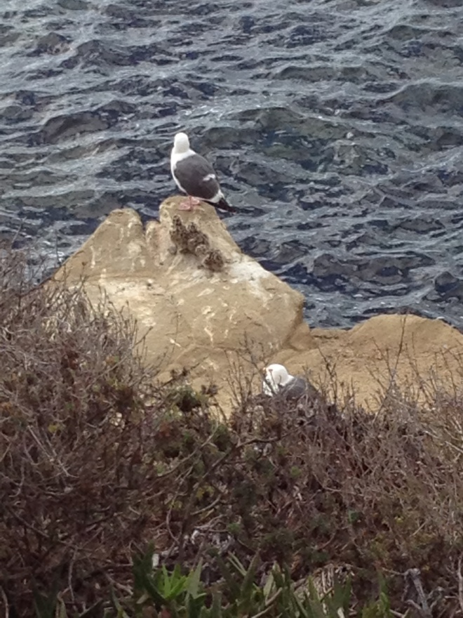 See the little baby sea gulls behind the front one?  So cute!